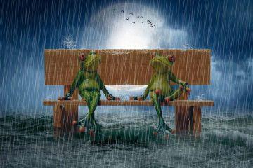grenouilles sous la pluie